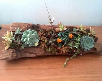 Driftwood Succulent Arrangement