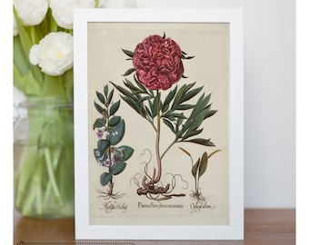 Vintage illustration of Red Peony - framed fine art print, flower art, home decor, kitchen art - FREE SHIPPING 93
