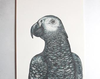 African Grey Parrot - Original A4 portrait illustration