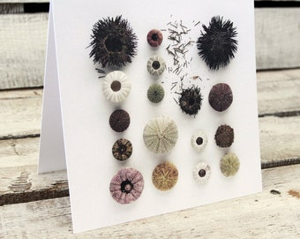Sea URCHINS greeting card