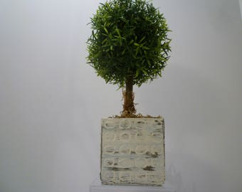 TOPIARY. TOPIARY in POT.  Greenery Potted Fern Topiary. Cottage Decor. Topiary in Distressed White Pot. Shabby Chic Cottage Decor.