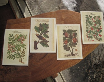 200 Postcards - Reproduction Botanical Woodcuts of 4 Trees by John Gerard Printed in Italy Post Cards