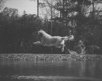 Jump - Dog Photography Photo Print