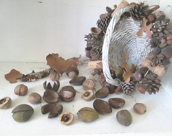 Rustic Hickory Nut Collection, Woodland Craft Material, Assemblage Material