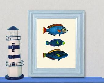 Blue Fish 1 Art Print - Nautical Illustration Wall hanging - Beach Decor Poster Vintage Illustration