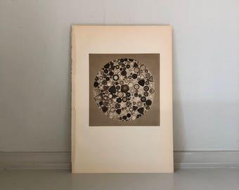 1934 DIATOMS SEA ALGAE print vintage microscopic sea plant sepia lithograph -  Phytoplankton