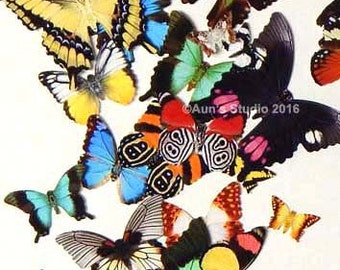 Paper Butterflies, Realistic paper butterflies, Small paper butterfly punchies