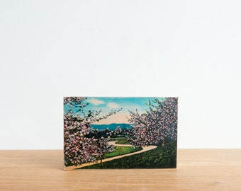 Americana Vintage Postcard Art Block 'Springtime in the Mountains' - South Carolina, cherry blossoms, spring drive, retro postcard
