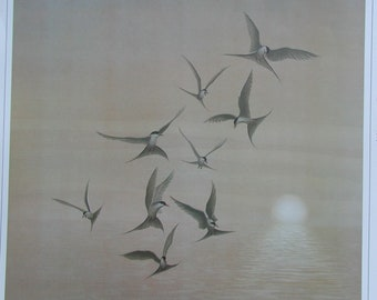 Arctic Tern, tern, wildlife, birds, wildfowl, bird