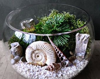 Genuine Ammonite Fossil Terrarium Display with Live Moss