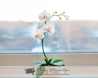 Orchid Phalaenopsis in the pot - Polymer Clay Flowers