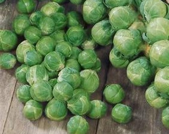 Long Island Improved Heirloom Brussel Sprout Seeds Non-GMO Naturally Grown Open Pollinated Gardening