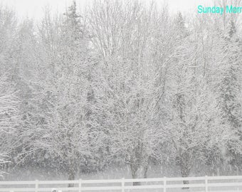 Winter Photograph, Instant Download, Background display for products, Original Photography, Printable