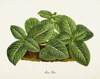 Mosaic Plant Art Print, Botanical Art Print, Mosaic Plant Wall Art, Botanical Print, Home Decor, green art print