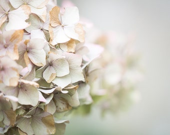 Flower Print - Romantic Pale Hydrangeas Fine Art Photograph - Lovely Floral Art