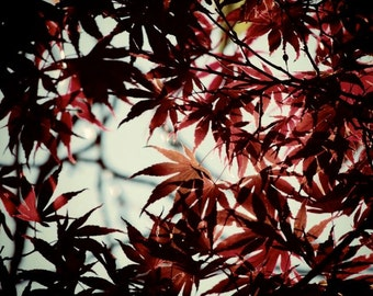 Japanese Maple Tree - Red Leaves - Autumn Tree Art - Fall Foliage - Autumn Red - Wall Decor - Elegant Leaves - Nature Photograph