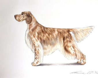 English Setter Dog - Archival Fine Art Print - AKC Best in Show Champion - Breed Standard - Sporting Group - Original Art Print