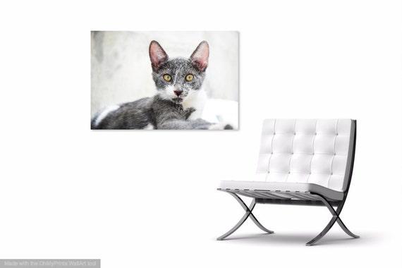Cat Prints,  Cat Portrait, Animal Print, Cute Animals, Pet Picture, Photographic Print, Feline prints