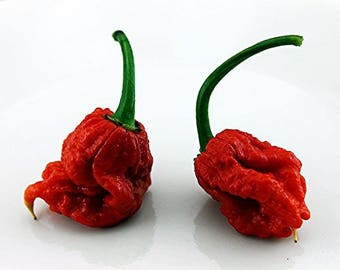 Carolina Reaper Chilli Pepper Hot HP22B Seeds 25+