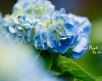 Blue Hydrangea Floral Wall Art, Fine Art Photography, Photo Print, Flower, Spa, Home Decor, Living Room, Nursery, Family, Bedroom, Botanical