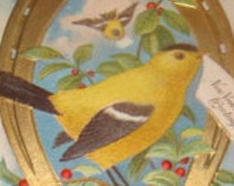 Nice Embossed Vintage Postcard (Goldfinch)