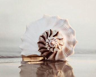 "Vertical Seashell Photograph, Beach Photography Decor, Sea Shell Print, Reflection, Sand, Coastal Home Decor, ""Reflecting Seashell"""