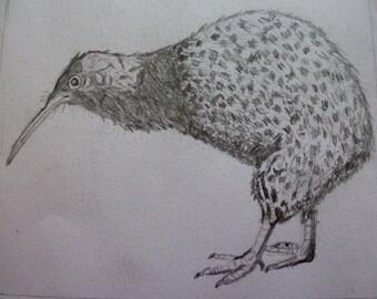 Illustration - Reproduction by Romola - Australian Echidna Bird