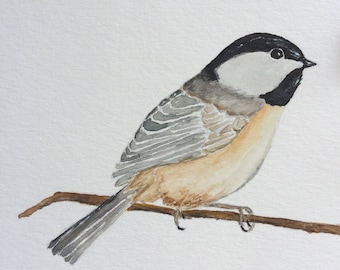 Black Capped Chickadee Original Watercolor Painting