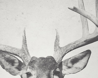 8x12 Buck; deer, wildlife art, fine art photography, hunting art, cabin art, modern art, wall art,  she shed art, by F2images
