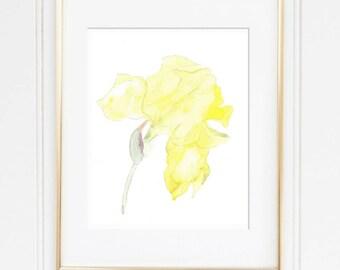 yellow Iris, botanical yellow print, Iris flower Print, yellow flower watercolor, Watercolor Iris Painting, yellow flower watercolor