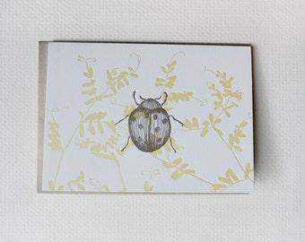 Ladybug Letterpress Notecards