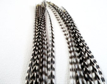 EXTRA LONG Grizzly Feather Hair Extensions 4 Feathers