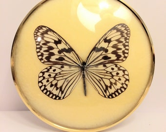 """Vintage Taxidermy """"Hestia Leucmoe Formosa""""Butterfly Specimen Framed with Domed Glass"""