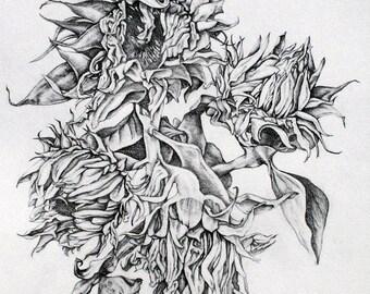 Giclee print: Sunflowers. Original pencil drawing by Maria Hampton.