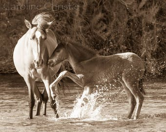 """Horse print,Wild Horse Photo from The Salt River in Arizona, Horse Photograph.Title: """"Water Baby  """""""