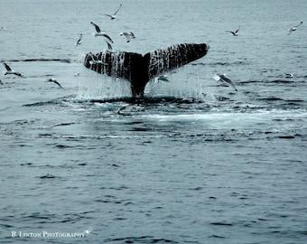 Nature Photography - Whale Photograph - Alaska - Whale - Water Photo - Alaska Landscape - Fine Art Photography Print - Blue Black Home Decor
