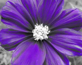 Purple Flower Print, Purple Flower Photo, Purple Flower Picture, Purple Bedroom Decor, Purple Flower Art, Purple Decor, Flower Print, Purple