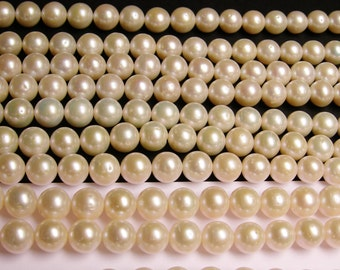 Fresh water Pearls 11mm-12mm - full strand - 38 beads/Pearl - lustrous classic white - Shell pearl