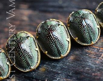 RARE Antique Scarab Brooch. Victorian. Egyptian Revival. Egyptomania. Petrified Beetle.