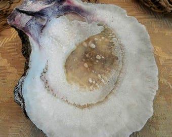 California Scallop Shell Large Rustic Unpolished Santa Barbara Beach