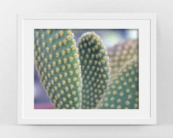 Cactus Photo, Cactus Print, Succulent Wall Art, Succulent Photo, Boho Room Decor, Botanical Print, Cactus Plant Photo, Printable Art, Cacti