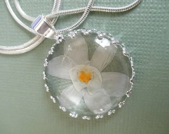 Narcissus-Paper White Blossom Atop Sage Green Background Crown Pendant-Symbol Rebirth, New Beginnings, Synonymous with Spring-Nature's Art