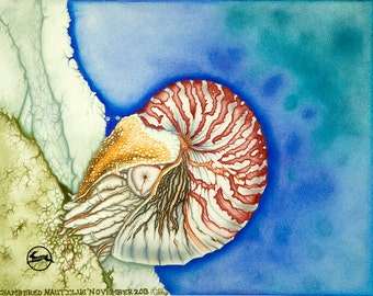 Chambered Nautilus - Pencil Drawing - Museum Quality Fine Art Print
