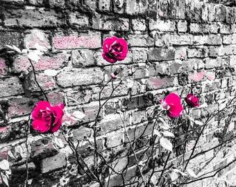 Colour Pop Roses A3 Poster