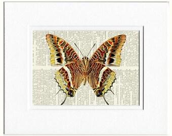 leopard butterfly print