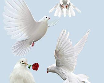 Dove Image, Dove Cutout, WHITE BIRD IMAGE, Bird Cutout, Large Clipart, Cute Bird, Transparent Background, Transfer Template, Supply
