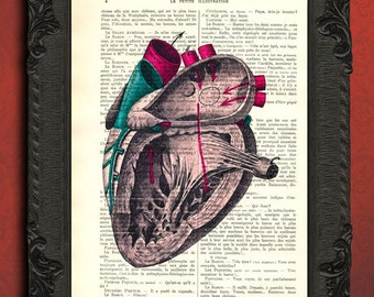 anatomical heart print anatomical heart study illustration vintage in color