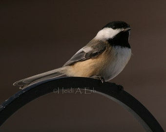 photo note card, blank note card, photo card, Bird note card, Chickadee, wildlife note card, nature note card, Bird photo card, nature