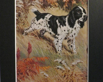 SPRINGER SPANIEL Vintage Mounted 1958 Walter A Weber Springer spaniel dog plate print Unique Christmas birthdayThanksgiving gift