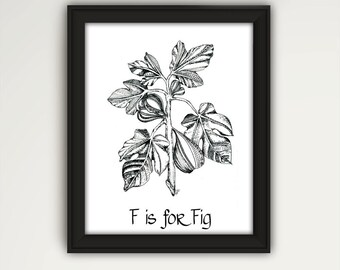 Fig Print, Fig Tree Wall Art, Fig Kitchen Art, Fig Decor, Black and White Art, Zentangle Art, Fig Gift Art Print, Housewarming Gift